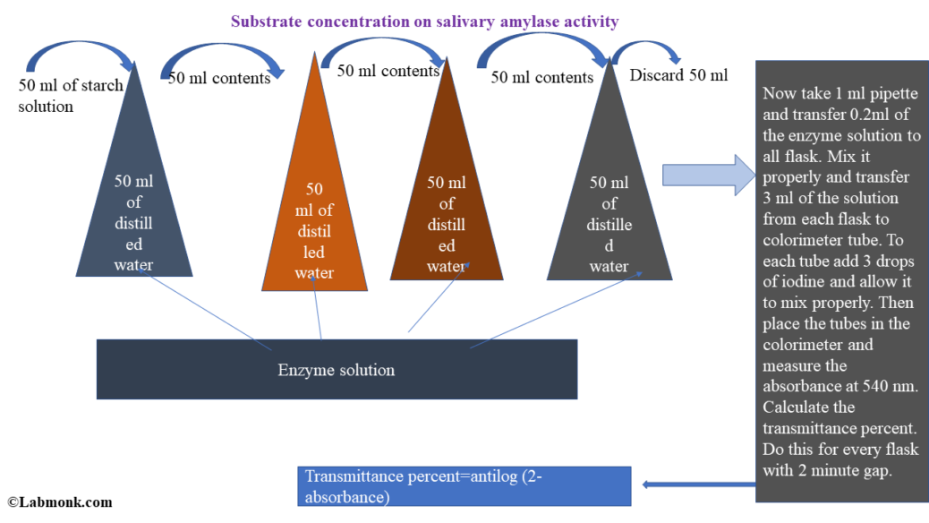 a study of the effects of substrate concentration on enzyme activity : what is the effect of altering the concentration of substrate (lactose) on the activity of the enzyme lactase.